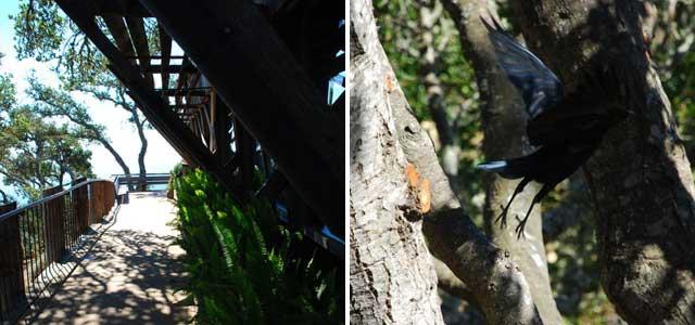 Le Café Kevah et l'oiseau bleu de la forêt