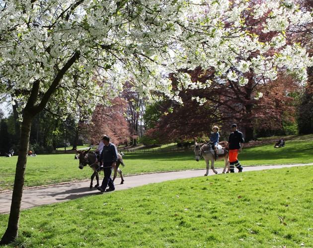 gratuit,balade,âne,animaux,parc,jeux,kids friendly