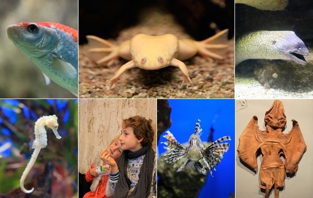 animaux,poissons,insolite,aquarium,requins