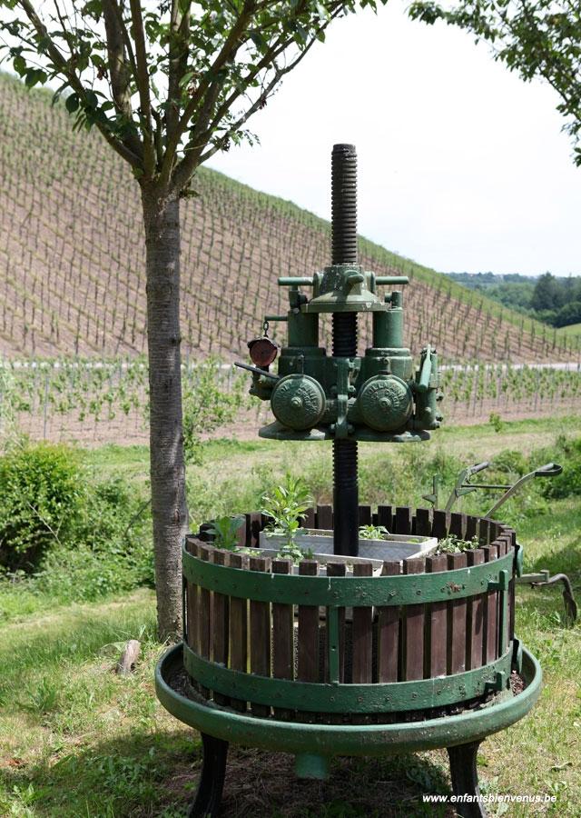 vignoble,campagne,eifel, vin, jus, resto, terrasse
