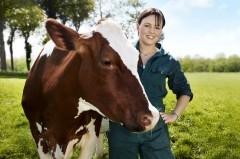 ferme, lait, yaourt, visite, campagne, gratuit