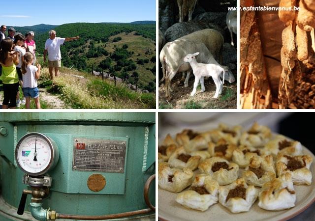 éco-tourisme, cévennes, lozèez, montagne, nature, ferme, visite, gites, chambre d'hôtes