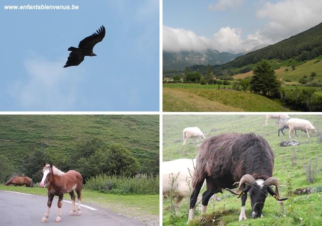 pays basque, montagne, pyrénées