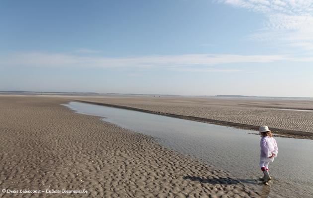phoques,marche,plage,balade, oiseaux, coup de coeur